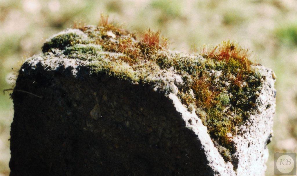 Mit Moos bewachsene Steinsäule, Nahaufnahme.
