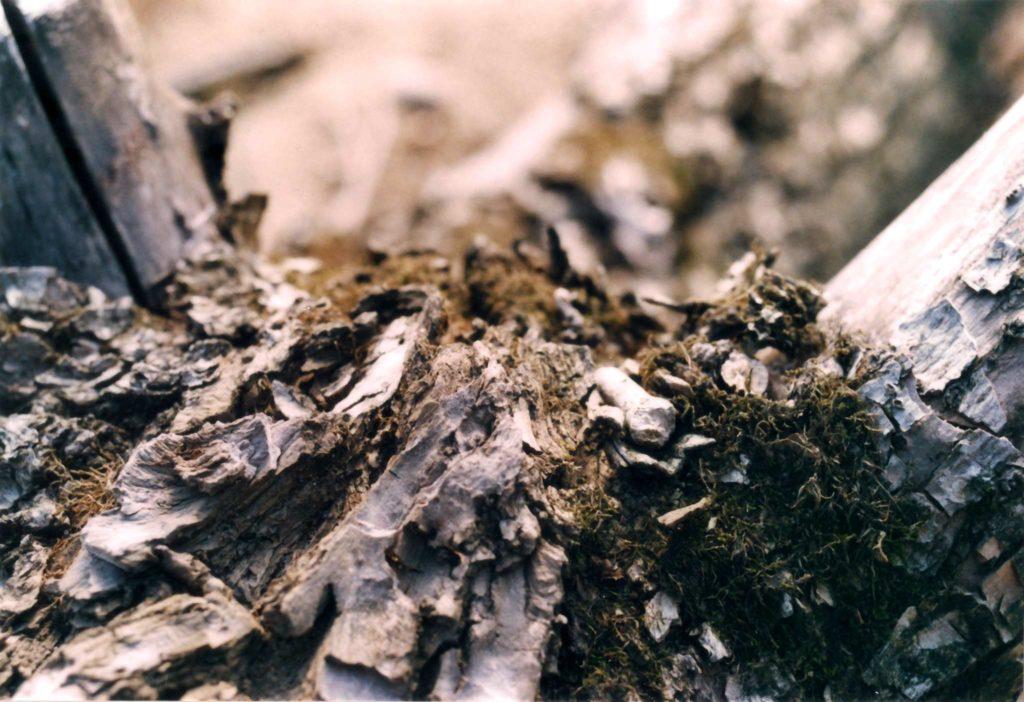 """""""Borke"""" aufgenommen mit Nikon F-301 und Nikkor 35-70"""