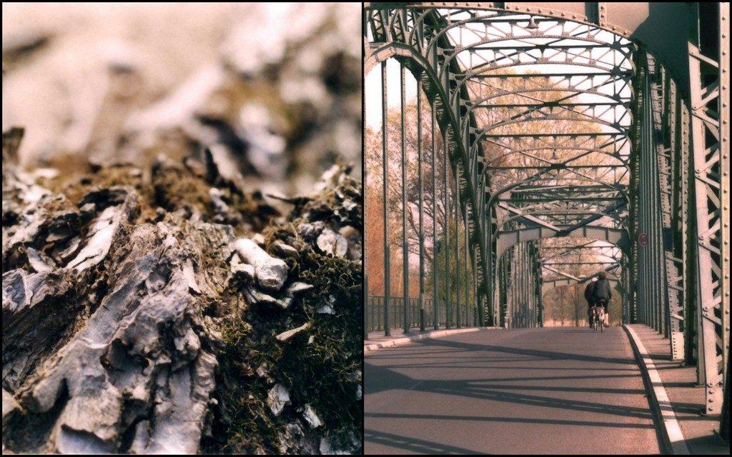 Collage_Tiefenschärfe