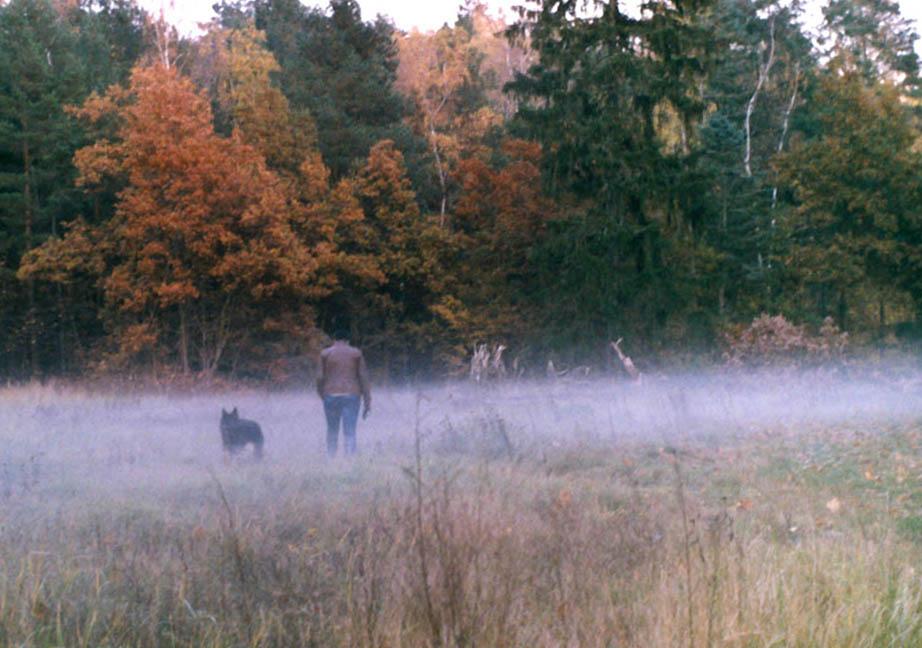 Hund, Fau und Nebel