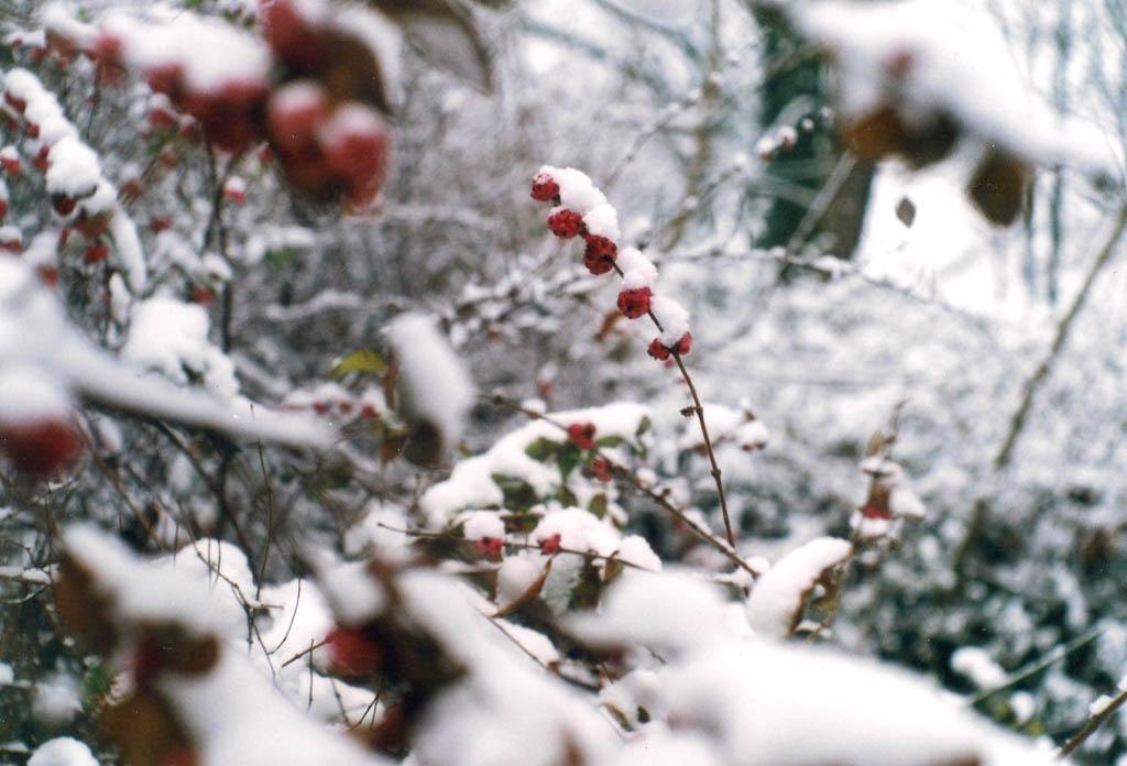 """""""Hommage an Schneewittchen"""""""