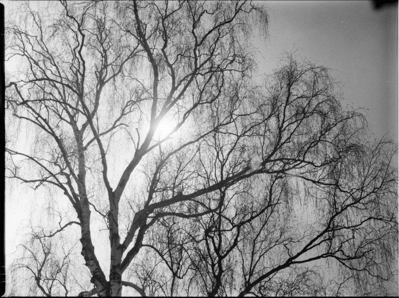 Landschaft in Schwarz/Weiß