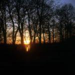Analoge Aufnahme eines Sonnenuntergangs hinter Bäumen