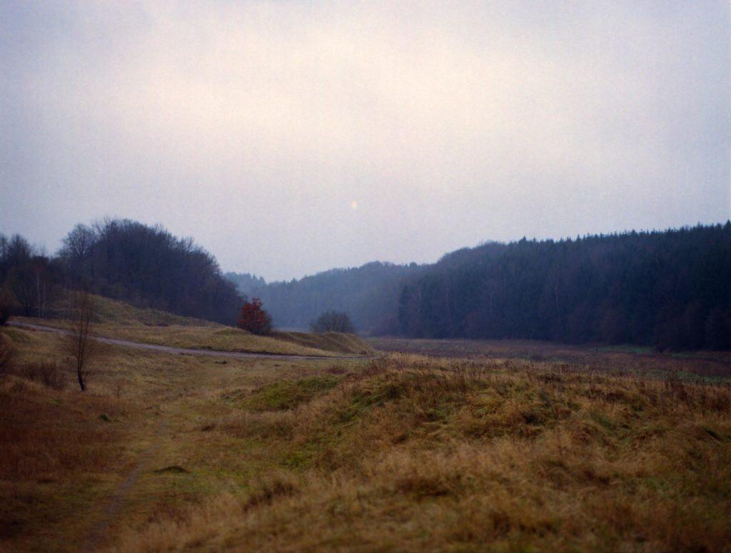 Weiter Blick auf eine Wiese mit Waldrand in der Ferne.