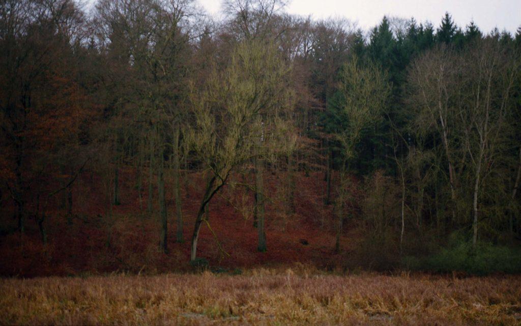 Bäume auf rotem Herbstlaub.