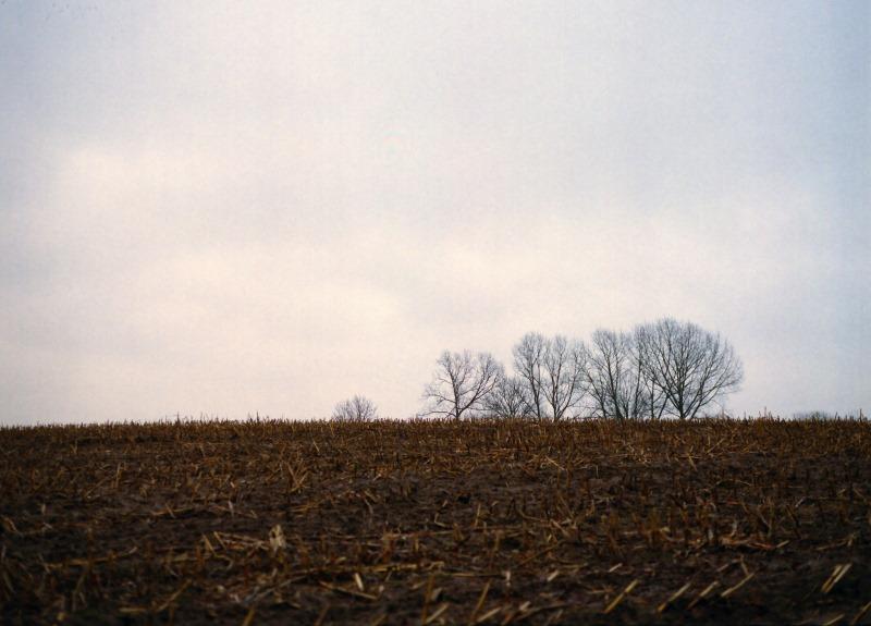 Horizontblick auf Bäume