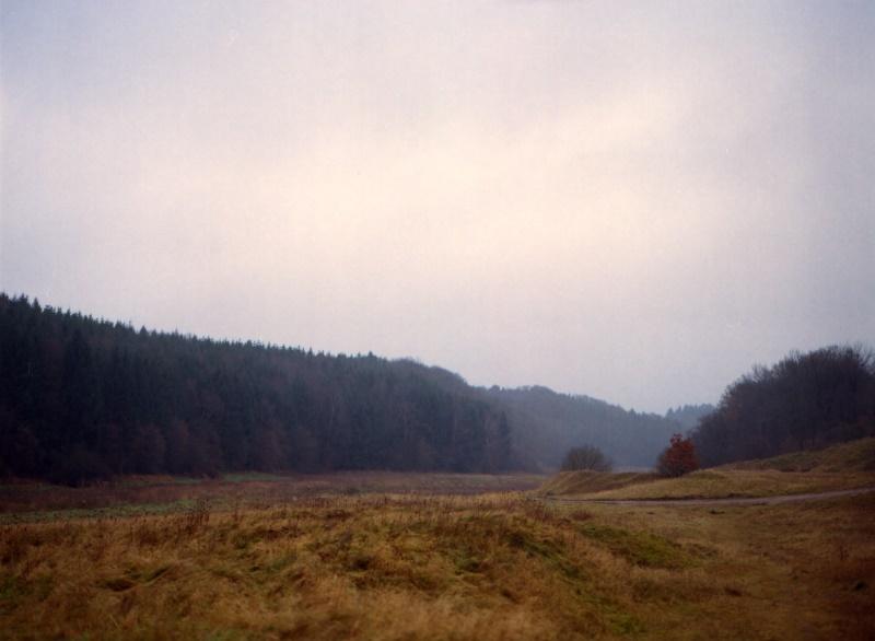 Weiter Blick auf eine Wiese hin zum Waldrand.
