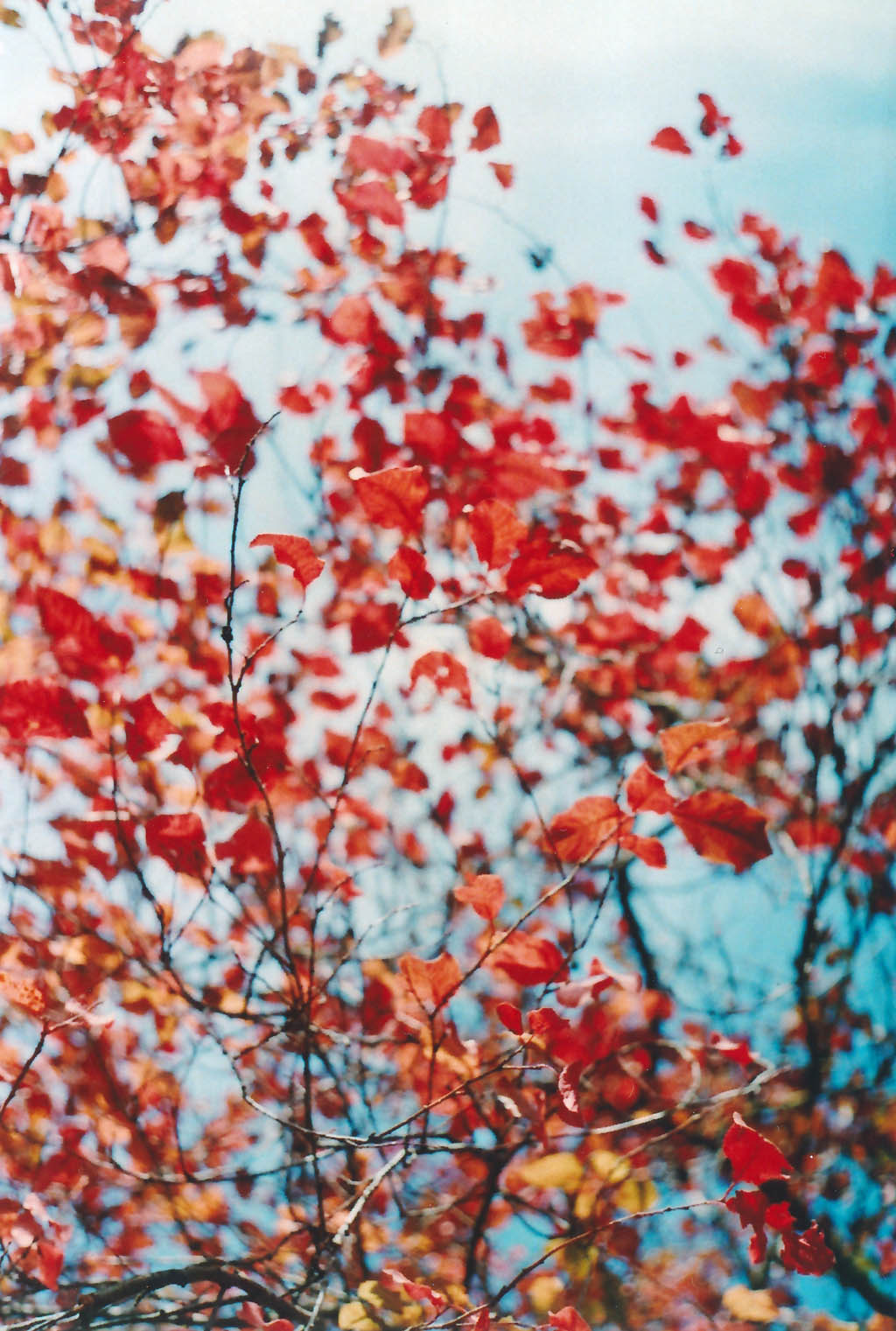 // Roter Herbst //