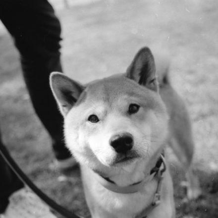 Testbericht: Die Schwarz-Weiß-Filme von Kodak Alaris