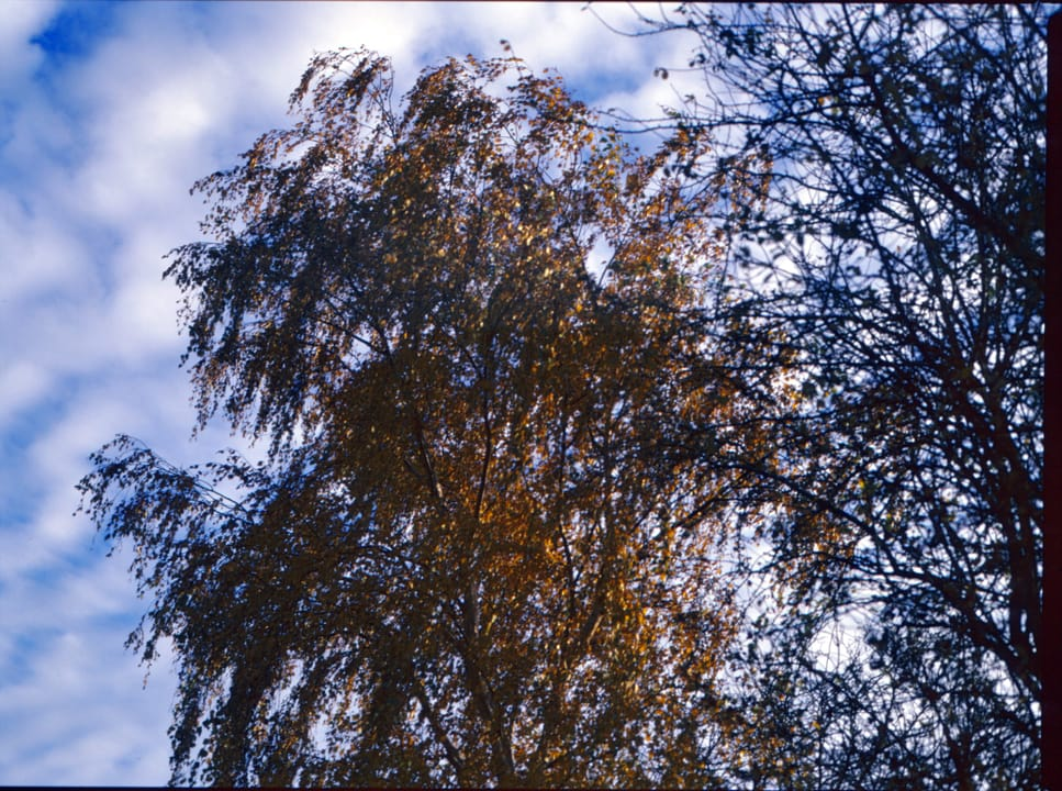 Birken vor Himmel - Kodak E100 120 Rollfilm analoge Fotografie