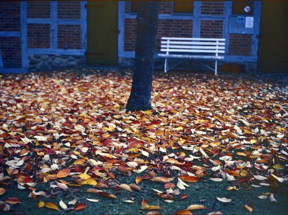 Herbstlaub auf Gras vor Fachwerkhaus