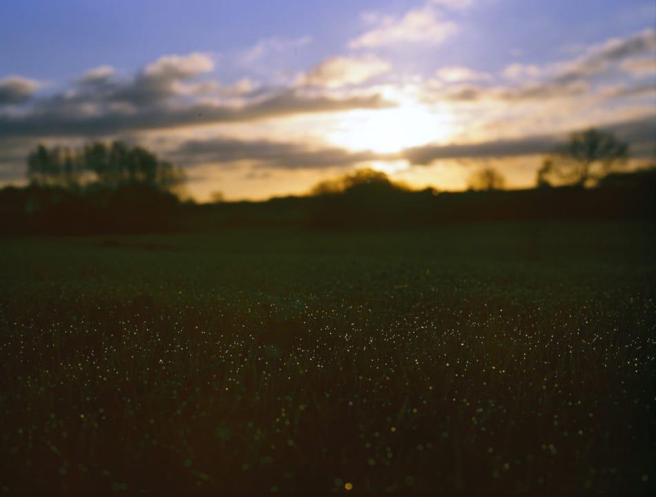 Sonnenaufgang mit Fokus auf Tautropfen auf Gras